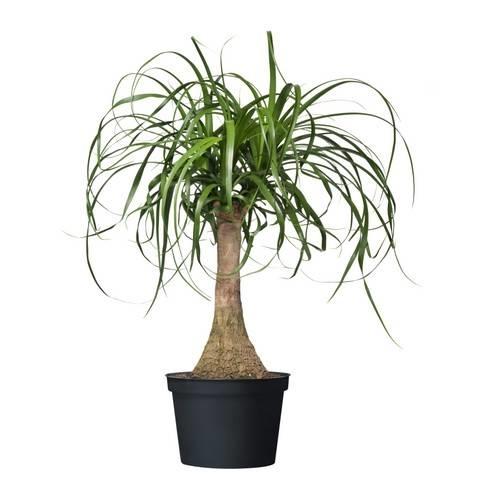 Piante Da Appartamento In Vaso.Come Ottenere Anche In Appartamento Piante Da Vaso Rigogliose O2
